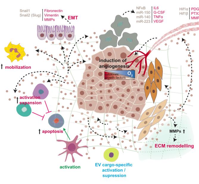 Cancer Cell:细胞外囊泡是肿瘤转移中的通讯介质